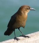 CW4-Bird